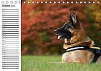 Deutsche Schäferhunde - Liebenswerte Graunasen (Tischkalender 2019 DIN A5 quer) - Produktdetailbild 10