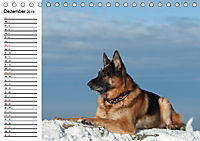 Deutsche Schäferhunde - Liebenswerte Graunasen (Tischkalender 2019 DIN A5 quer) - Produktdetailbild 12