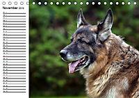 Deutsche Schäferhunde - Liebenswerte Graunasen (Tischkalender 2019 DIN A5 quer) - Produktdetailbild 11