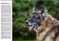 Deutsche Schäferhunde - Liebenswerte Graunasen (Wandkalender 2019 DIN A2 quer) - Produktdetailbild 11