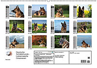 Deutsche Schäferhunde - Liebenswerte Graunasen (Wandkalender 2019 DIN A2 quer) - Produktdetailbild 13