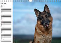 Deutsche Schäferhunde - Liebenswerte Graunasen (Wandkalender 2019 DIN A4 quer) - Produktdetailbild 7