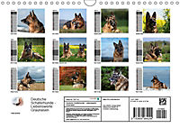 Deutsche Schäferhunde - Liebenswerte Graunasen (Wandkalender 2019 DIN A4 quer) - Produktdetailbild 13