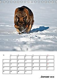 Deutsche Schäferhunde - Seelentröster auf vier Pfoten (Tischkalender 2019 DIN A5 hoch) - Produktdetailbild 1