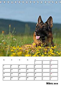 Deutsche Schäferhunde - Seelentröster auf vier Pfoten (Tischkalender 2019 DIN A5 hoch) - Produktdetailbild 3