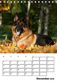Deutsche Schäferhunde - Seelentröster auf vier Pfoten (Tischkalender 2019 DIN A5 hoch) - Produktdetailbild 11