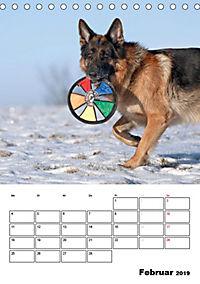 Deutsche Schäferhunde - Seelentröster auf vier Pfoten (Tischkalender 2019 DIN A5 hoch) - Produktdetailbild 2