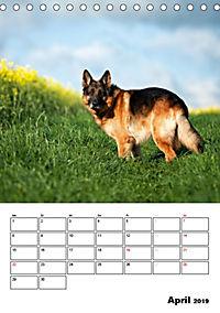 Deutsche Schäferhunde - Seelentröster auf vier Pfoten (Tischkalender 2019 DIN A5 hoch) - Produktdetailbild 4