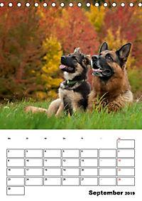 Deutsche Schäferhunde - Seelentröster auf vier Pfoten (Tischkalender 2019 DIN A5 hoch) - Produktdetailbild 9