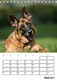 Deutsche Schäferhunde - Seelentröster auf vier Pfoten (Tischkalender 2019 DIN A5 hoch) - Produktdetailbild 6