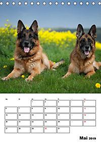 Deutsche Schäferhunde - Seelentröster auf vier Pfoten (Tischkalender 2019 DIN A5 hoch) - Produktdetailbild 5