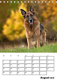 Deutsche Schäferhunde - Seelentröster auf vier Pfoten (Tischkalender 2019 DIN A5 hoch) - Produktdetailbild 8