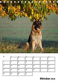 Deutsche Schäferhunde - Seelentröster auf vier Pfoten (Tischkalender 2019 DIN A5 hoch) - Produktdetailbild 10