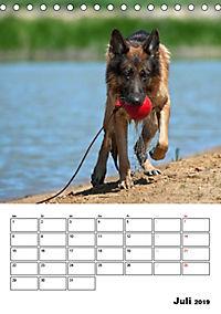 Deutsche Schäferhunde - Seelentröster auf vier Pfoten (Tischkalender 2019 DIN A5 hoch) - Produktdetailbild 7
