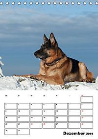 Deutsche Schäferhunde - Seelentröster auf vier Pfoten (Tischkalender 2019 DIN A5 hoch) - Produktdetailbild 12