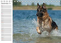 Deutsche Schäferhunde Seelentröster (Tischkalender 2019 DIN A5 quer) - Produktdetailbild 9