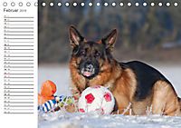 Deutsche Schäferhunde Seelentröster (Tischkalender 2019 DIN A5 quer) - Produktdetailbild 2
