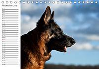Deutsche Schäferhunde Seelentröster (Tischkalender 2019 DIN A5 quer) - Produktdetailbild 11