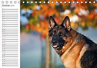 Deutsche Schäferhunde Seelentröster (Tischkalender 2019 DIN A5 quer) - Produktdetailbild 10