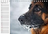 Deutsche Schäferhunde Seelentröster (Tischkalender 2019 DIN A5 quer) - Produktdetailbild 12