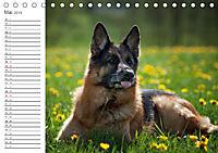 Deutsche Schäferhunde Seelentröster (Tischkalender 2019 DIN A5 quer) - Produktdetailbild 5