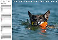 Deutsche Schäferhunde Seelentröster (Tischkalender 2019 DIN A5 quer) - Produktdetailbild 7
