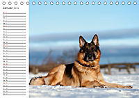 Deutsche Schäferhunde Seelentröster (Tischkalender 2019 DIN A5 quer) - Produktdetailbild 1