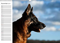 Deutsche Schäferhunde Seelentröster (Wandkalender 2019 DIN A3 quer) - Produktdetailbild 7
