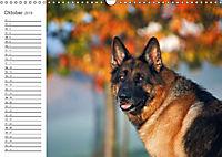 Deutsche Schäferhunde Seelentröster (Wandkalender 2019 DIN A3 quer) - Produktdetailbild 13