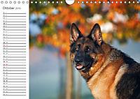 Deutsche Schäferhunde Seelentröster (Wandkalender 2019 DIN A4 quer) - Produktdetailbild 10