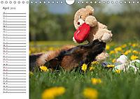Deutsche Schäferhunde Seelentröster (Wandkalender 2019 DIN A4 quer) - Produktdetailbild 4