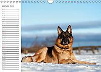 Deutsche Schäferhunde Seelentröster (Wandkalender 2019 DIN A4 quer) - Produktdetailbild 1