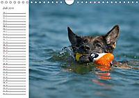 Deutsche Schäferhunde Seelentröster (Wandkalender 2019 DIN A4 quer) - Produktdetailbild 7