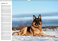 Deutsche Schäferhunde Seelentröster (Wandkalender 2019 DIN A3 quer) - Produktdetailbild 1
