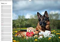 Deutsche Schäferhunde Seelentröster (Wandkalender 2019 DIN A3 quer) - Produktdetailbild 3