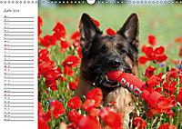 Deutsche Schäferhunde Seelentröster (Wandkalender 2019 DIN A3 quer) - Produktdetailbild 6