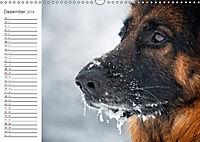 Deutsche Schäferhunde Seelentröster (Wandkalender 2019 DIN A3 quer) - Produktdetailbild 12