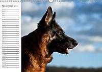 Deutsche Schäferhunde Seelentröster (Wandkalender 2019 DIN A3 quer) - Produktdetailbild 11