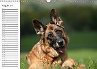 Deutsche Schäferhunde Seelentröster (Wandkalender 2019 DIN A3 quer) - Produktdetailbild 8