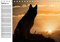Deutsche Schäferhunde - Senioren auf vier Pfoten (Tischkalender 2019 DIN A5 quer) - Produktdetailbild 2