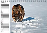 Deutsche Schäferhunde - Senioren auf vier Pfoten (Tischkalender 2019 DIN A5 quer) - Produktdetailbild 1