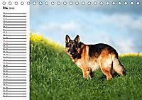 Deutsche Schäferhunde - Senioren auf vier Pfoten (Tischkalender 2019 DIN A5 quer) - Produktdetailbild 5