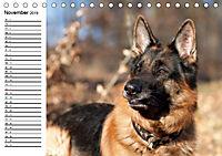 Deutsche Schäferhunde - Senioren auf vier Pfoten (Tischkalender 2019 DIN A5 quer) - Produktdetailbild 11