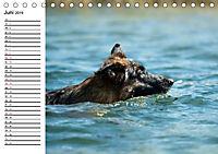 Deutsche Schäferhunde - Senioren auf vier Pfoten (Tischkalender 2019 DIN A5 quer) - Produktdetailbild 6
