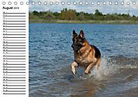 Deutsche Schäferhunde - Senioren auf vier Pfoten (Tischkalender 2019 DIN A5 quer) - Produktdetailbild 8