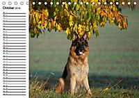 Deutsche Schäferhunde - Senioren auf vier Pfoten (Tischkalender 2019 DIN A5 quer) - Produktdetailbild 10