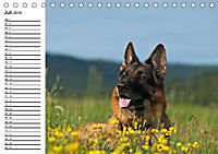 Deutsche Schäferhunde - Senioren auf vier Pfoten (Tischkalender 2019 DIN A5 quer) - Produktdetailbild 7