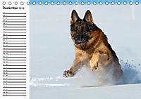 Deutsche Schäferhunde - Senioren auf vier Pfoten (Tischkalender 2019 DIN A5 quer) - Produktdetailbild 12