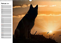 Deutsche Schäferhunde - Senioren auf vier Pfoten (Wandkalender 2019 DIN A3 quer) - Produktdetailbild 2