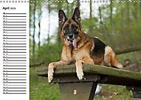 Deutsche Schäferhunde - Senioren auf vier Pfoten (Wandkalender 2019 DIN A3 quer) - Produktdetailbild 4